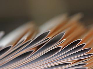 Informes no auditados provisionales